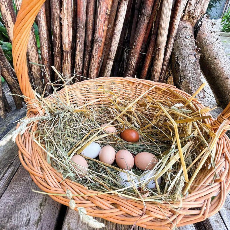 Frische Eier von unseren Hühnern aus Forchheim.